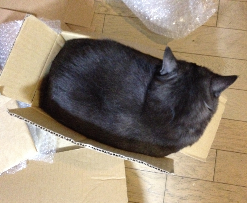 【本日のマウさん】その箱小さくないですか。