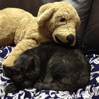 マウとIKEA犬