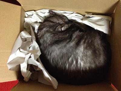 【本日のマウさん】新しい箱