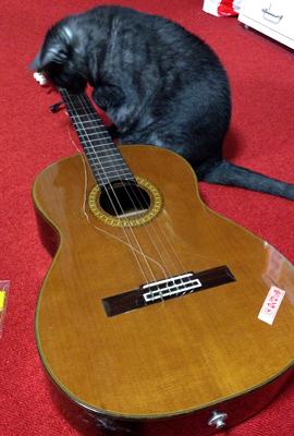 マウとギター