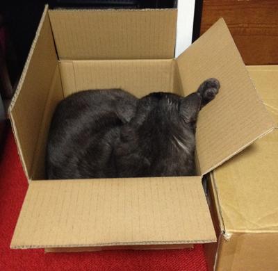 【本日のマウさん】新箱
