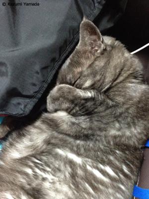 寝落ちマウ2