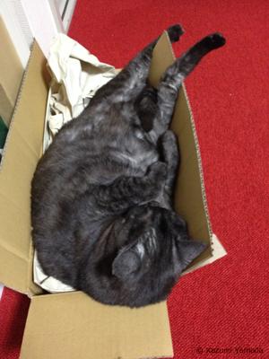 【本日のマウさん】箱を満喫